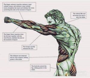 jab anatomy